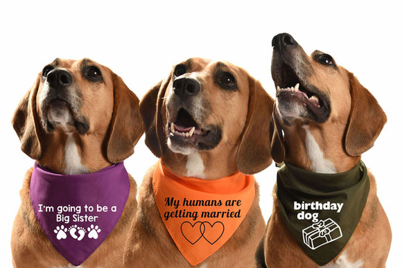 celebration dog bandanas wedding birthday civil ceremony, engagement, new baby