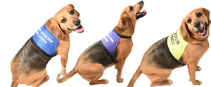 personalised printed dog vests for nervous dogs who need space