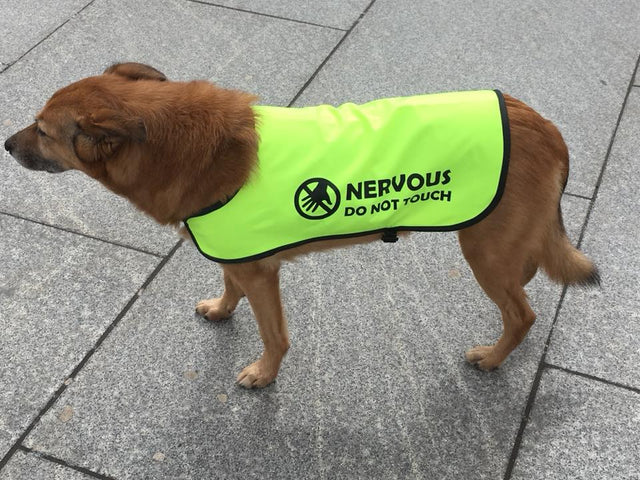 Nervous dog do not touch - Tara wearing a customised printed dog coat