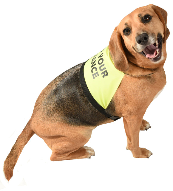 dog clothing with messages on for safety and training and space