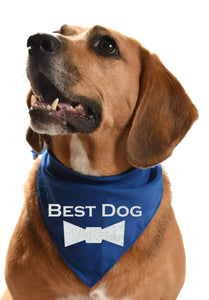 best dog silver glitter dog bandana for wedding day dog of honor