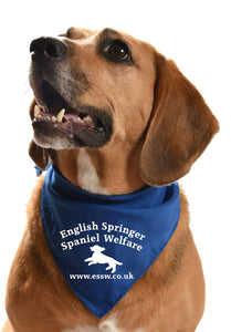 english springer spaniel welfare dog bandana fundraising rehoming