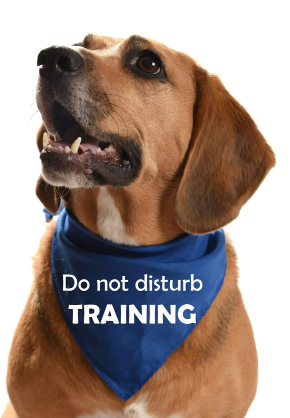 MULTIPACK OF 10 - Do not disturb TRAINING dog bandanas