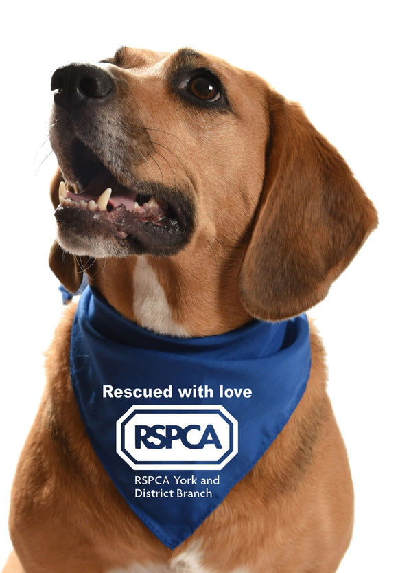 rspca york and district fundraising rehoming dog bandana