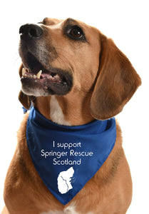 Springer Rescue Scotland fundraising dog bandana
