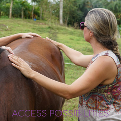 Access Body Processes For Horses & Equines | Access Possibilities