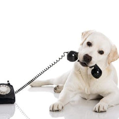 Alternative Pet Services | For Pets & Animals | Access Possibilities