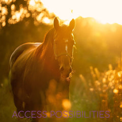 Remote Energy Healing For Horses   Equine Remote Energy Work   Access Possibilities