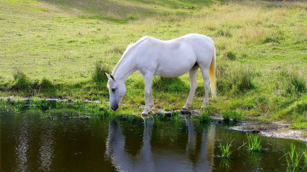 Equine Services With Julie D. Mayo   Holistic Wellness To Infinite Possibilities