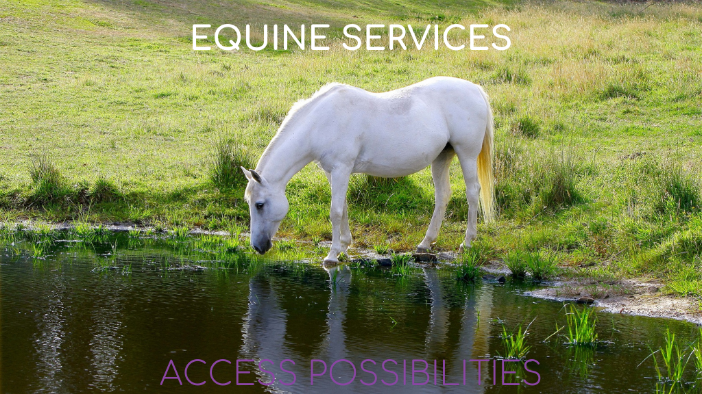 Equine Services with Julie D. Mayo   Facilitation For Horses   Access Possibilities