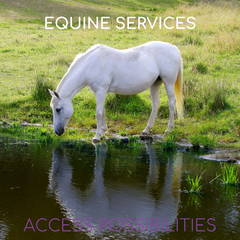 Equine Services | Facilitation & Energy Work For Horses | Access Possibilities