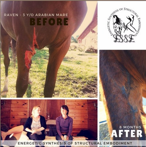 Raven, 3 year old Arabian mare, before and after Energetic Synthesis of Structural Embodiment (ESSE)