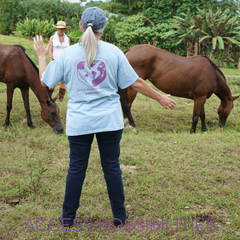 Symphony Session For Horses   Equine Energy Work And Facilitation   Access Possibilities