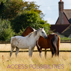 Whispering | Horse & Body Whispering | Access Possibilities