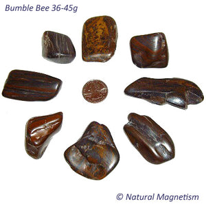 Jumbo Bumble Bee Tumbled Stones