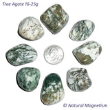 Large Tree Agate Tumbled Stones AKA Dendritic Quartz
