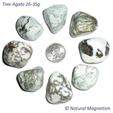 X-Large Tree Agate Tumbled Stones AKA Dendritic Quartz