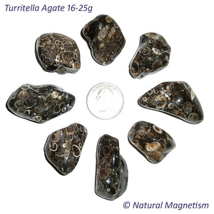 Large Turritella Agate Tumbled Stones From Africa AKA Turritella Fossil