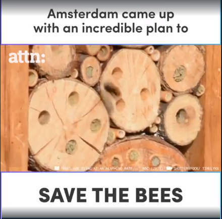 Amsterdam has a brilliant way to help save the bees.