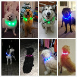 LED Lighted Collars to Keep Pets SAFE at Night! Rechargeable-The Pink Pigs, A Compassionate Boutique