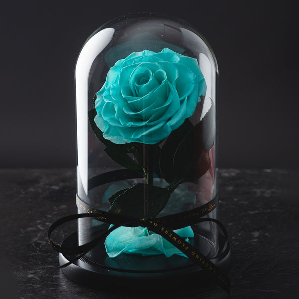 Mini Lasting Tiffany Blue 'Belleza' Rose