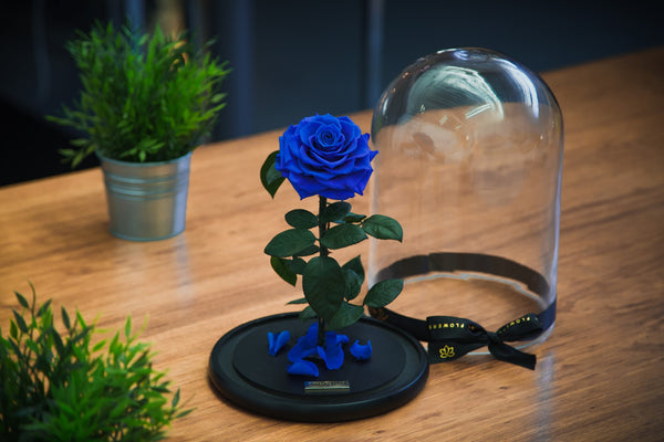 Lasting Royal Blue 'Belleza' Rose