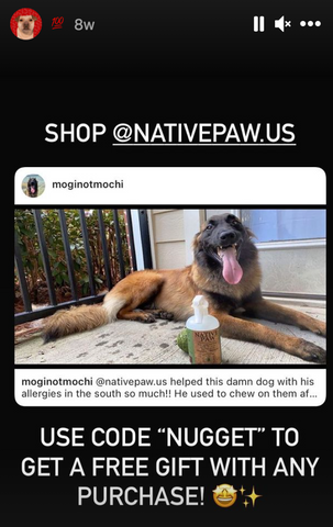 German Shepherd, stop licking your paws, paw licking stopped after using Native Paw sanitizer