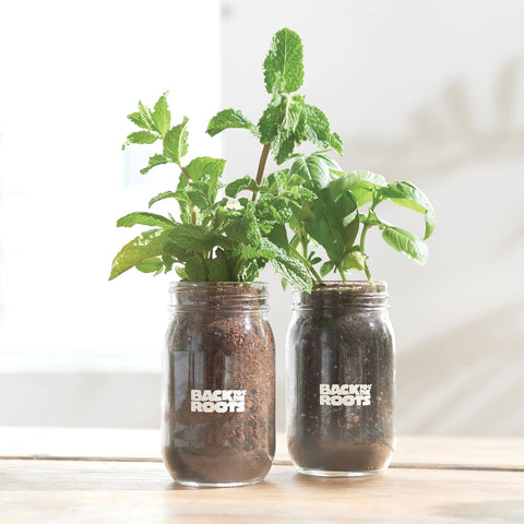 Eco Friendly Father's Day Gifts - Back to the Roots Indoor Garden