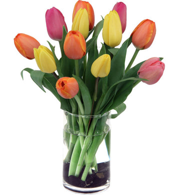 Fresh Tulips for Mom (vase not inc)..must be added to an another item for delivery