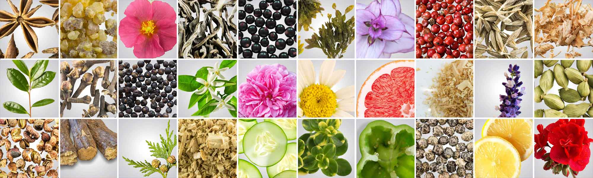 Collage of different ingredients found in Helio's scents