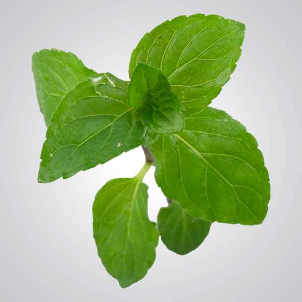 Photo of Peppermint leaves