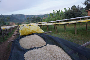 Burundi Muruta - Kayanza - Subscription