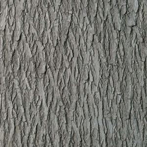 Flexbark - Walnut, Willow FB3519