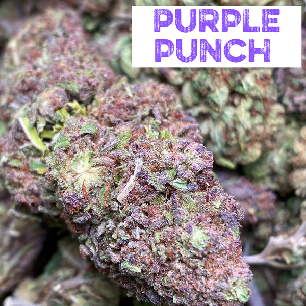 Purple Punch Hemp