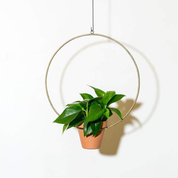 "NewMade LA: 18"" Hanging Circle Planter in Brass"