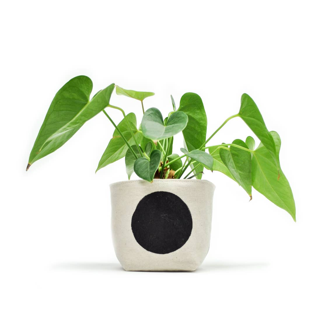 Gray Green Goods: Canvas Planter in Black Dot