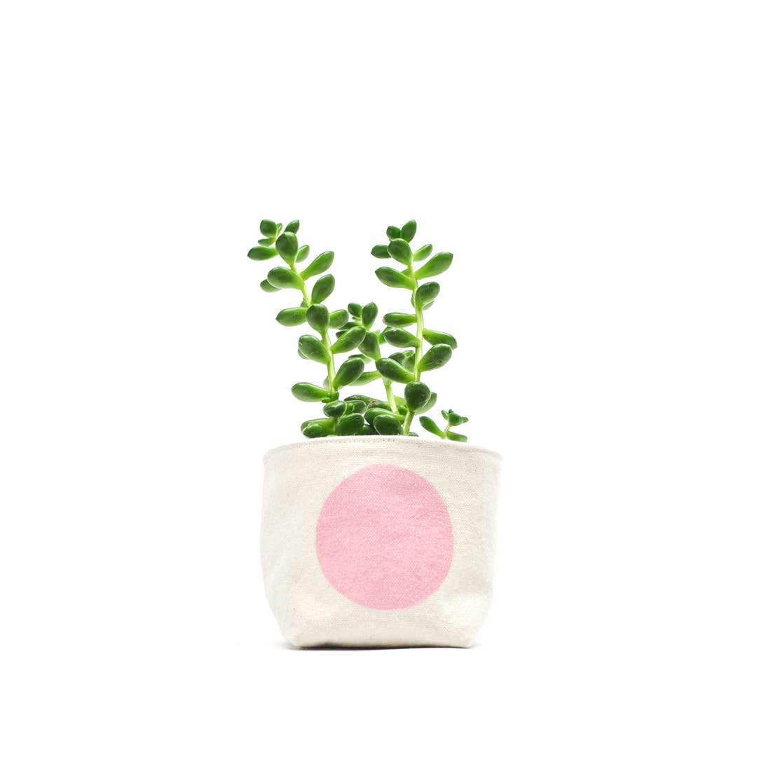 Gray Green Goods: Canvas Planter in Pink Dot