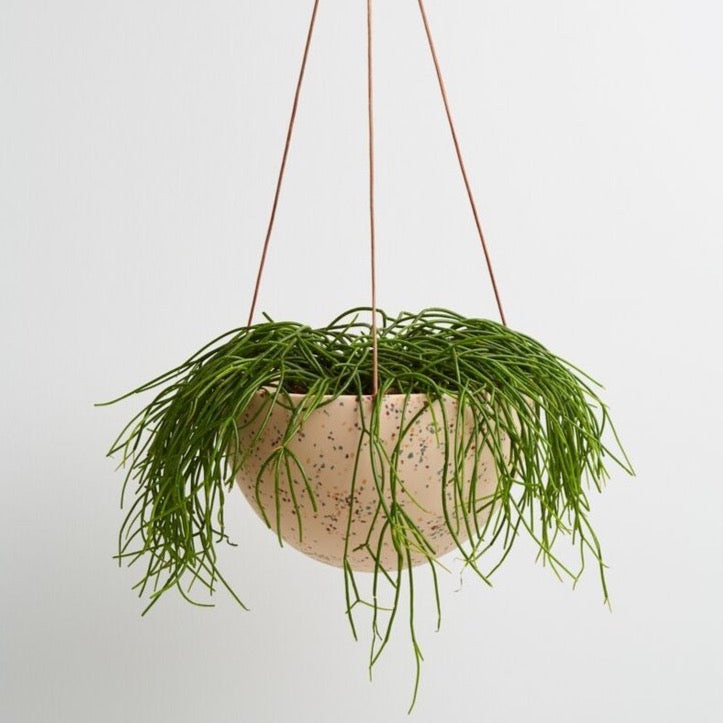 Capra Designs: Terrazzo Dome Hanging Planter in Salt