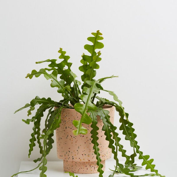 Capra Designs: Banjo Planter in Salt