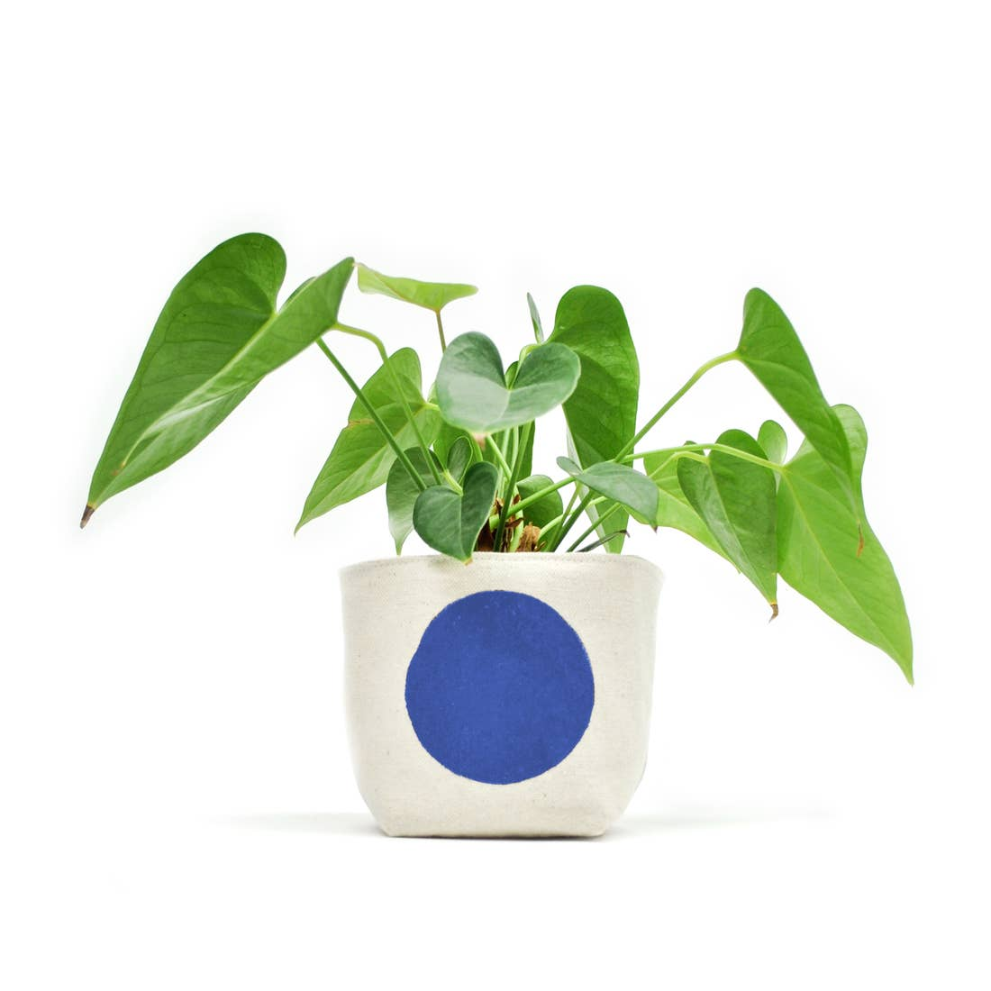 Gray Green Goods: Canvas Planter in Blue Dot