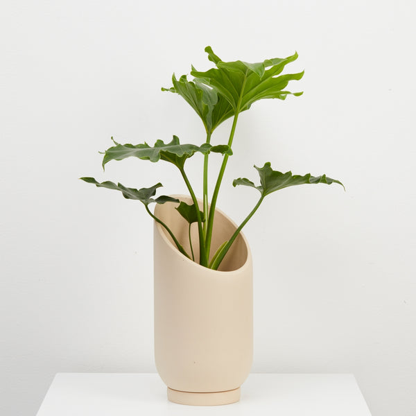 Capra Designs: Small Summit Planter in Fossil