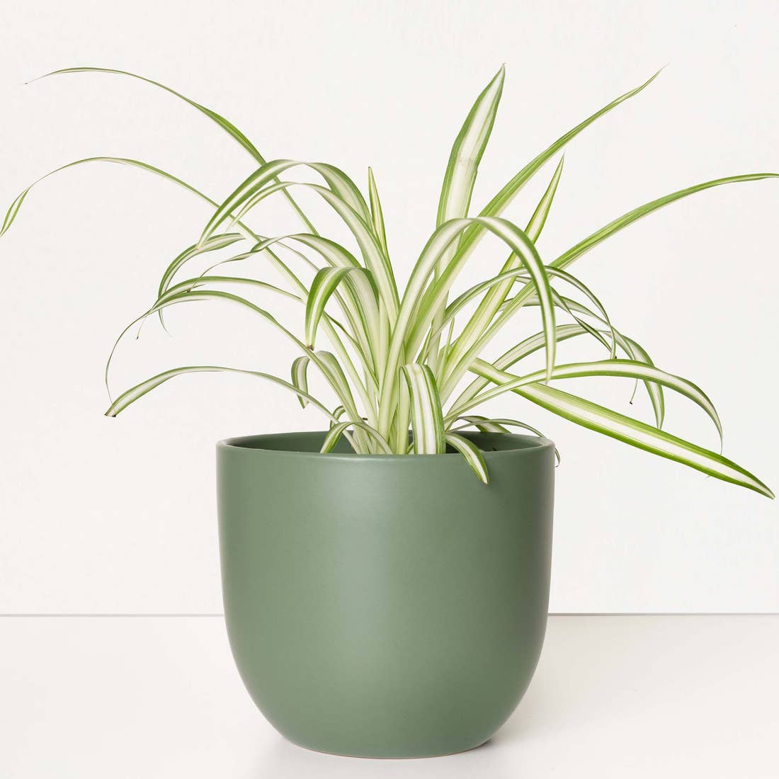 Contour Ceramic Planter in Forest Green