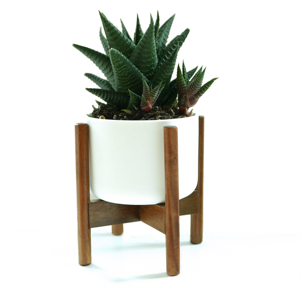 Mid Mod Wood Plant Stand, 8""