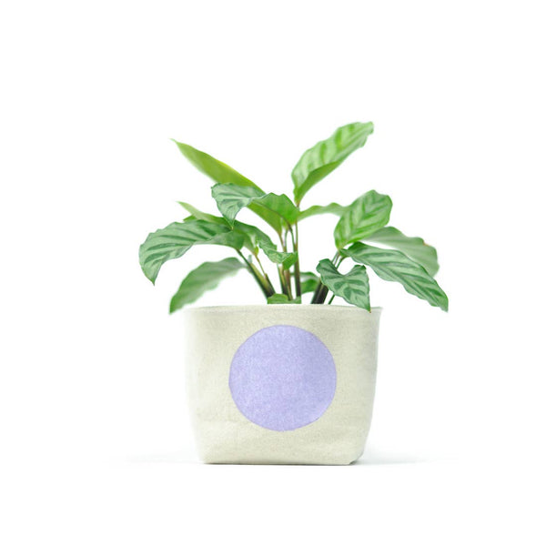Gray Green Goods: Canvas Planter in Lavender Dot