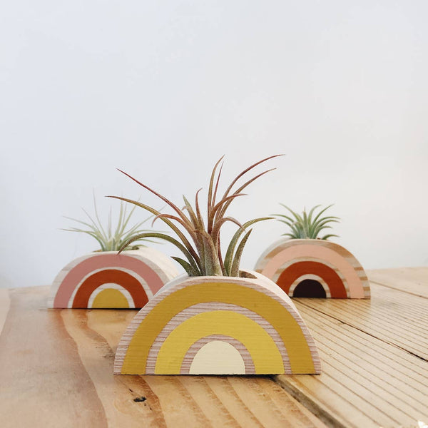 Rainbow Air Plant Holders