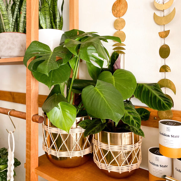 Gold & Rattan Planters