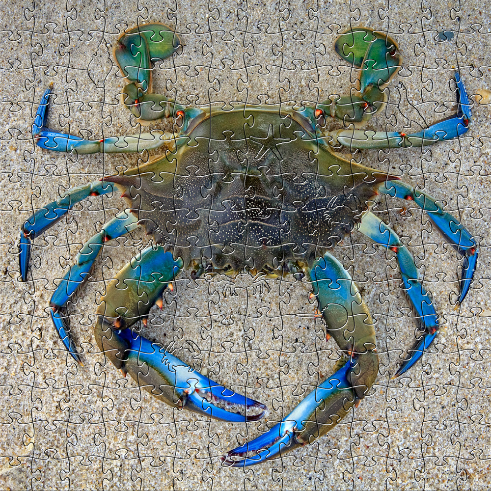 Blue Crab Medium Puzzle