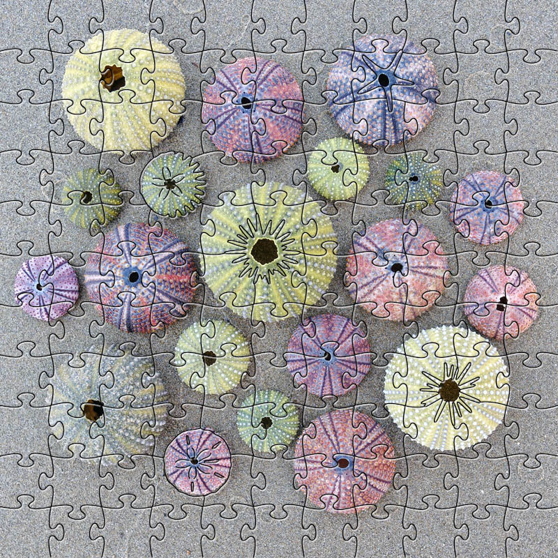 Sea Urchins Small Puzzle