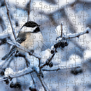 Black Capped Chickadee Smalll Puzzle