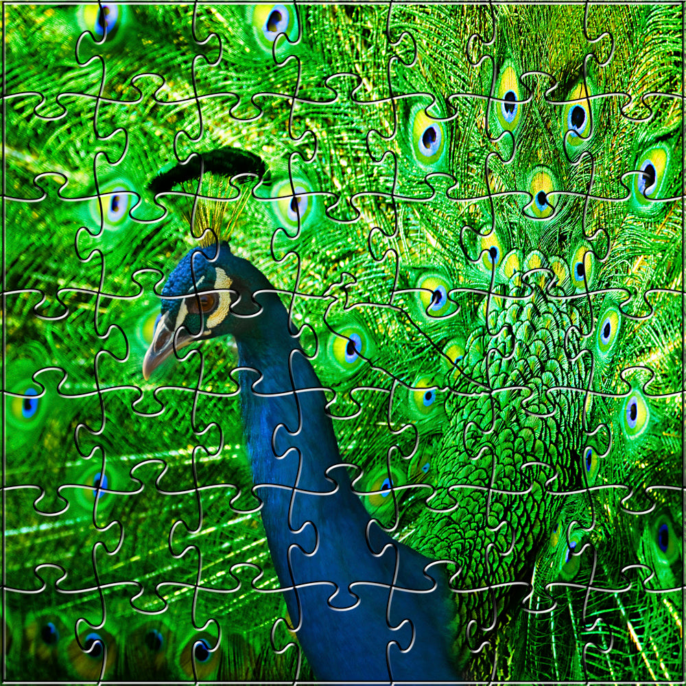 Peacock Teaser Puzzle